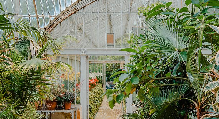 Indoor Gardens, the New Wellbeing Retreat